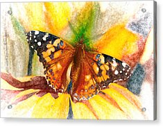 Gorgeous Painted Lady Butterfly Acrylic Print