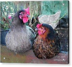 Gossip Girls Acrylic Print
