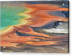 Grand Prismatic Spring Runoff Acrylic Print