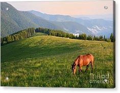 Grazing Horse On Mountain Pasture Acrylic Print