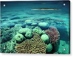 Great Barrier Reef In The Foreground Acrylic Print by Auscape / Uig
