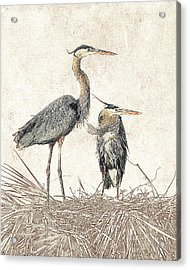 Acrylic Print featuring the photograph Great Blue Heron Couple - Photographic Drawing by Dawn Currie