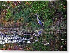 Great Blue Heron In Autumn Acrylic Print
