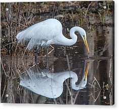 Great Egret In Breeding Plumage Dmsb0154 Acrylic Print