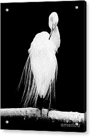 Acrylic Print featuring the digital art Great Egret In Full Bloom II by Kenneth Montgomery