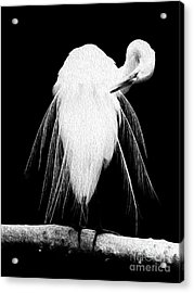 Acrylic Print featuring the digital art Great Egret In Full Bloom IIi by Kenneth Montgomery