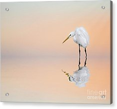 Great Egret Reflecting Acrylic Print