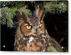 Great Horned Owl 10181802 Acrylic Print
