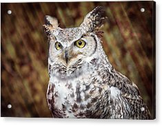 Acrylic Print featuring the photograph Great Horned Owl Portrait by Patti Deters
