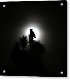 Great Horned Owl With Winter Moon Acrylic Print by Robin Street-Morris