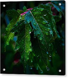 Green And Wet Leaves Acrylic Print