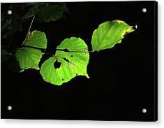 Green Leaves Acrylic Print