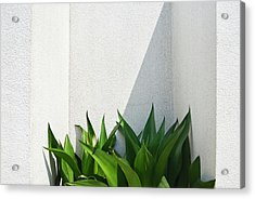 Green Plants And White Wall Acrylic Print
