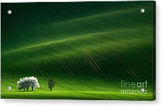 Green Rolling Spring Landscape With Acrylic Print by Vlad Sokolovsky