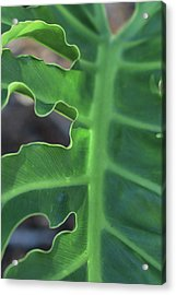 Green Space Acrylic Print