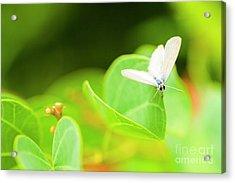 Green Wilderness Acrylic Print