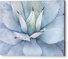 Acrylic Print featuring the photograph Grey Cactus by Top Wallpapers
