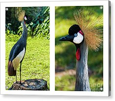 Grey Crowned Crane Gulf Shores Al Collage 10 Diptych Acrylic Print