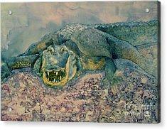Grinning Gator Acrylic Print