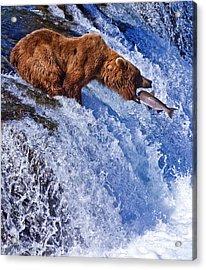 Grizly Bears At Katmai National Park Acrylic Print