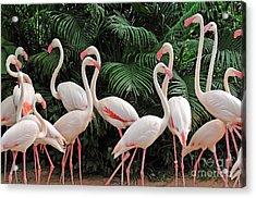 Group Of Pink Flamingos Acrylic Print