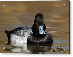 Grumpy Duck Acrylic Print