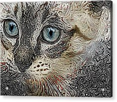 Gypsy The Siamese Kitten Acrylic Print