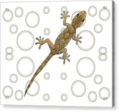 H Is For House Gecko Acrylic Print