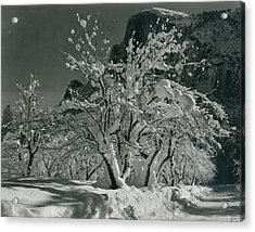 Half Dome, Apple Orchard, Yosemite Acrylic Print by Archive Photos