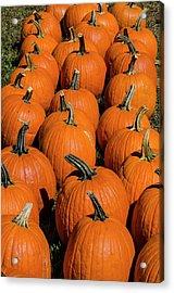 Halloween Harvest Acrylic Print