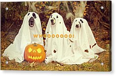 Acrylic Print featuring the photograph Halloween Hounds by ISAW Company
