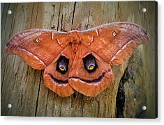 Halloween Moth Acrylic Print