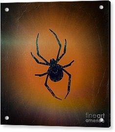 Acrylic Print featuring the mixed media Halloween Spider  by Rachel Hannah