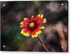 Acrylic Print featuring the photograph Hand Painted by Rick Furmanek