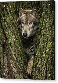 Hangin In The Tree Acrylic Print