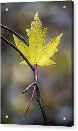 Acrylic Print featuring the photograph Hanging Out by Michael Arend