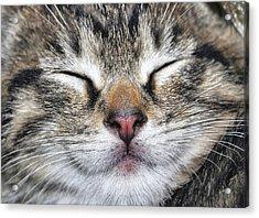 Happy Cat Acrylic Print