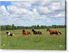 Happy Horses Acrylic Print by Corrie White Photography