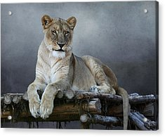 Acrylic Print featuring the photograph Happy Lioness by Debi Dalio