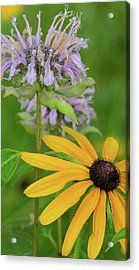 Acrylic Print featuring the photograph Harmony In Nature by Dale Kincaid