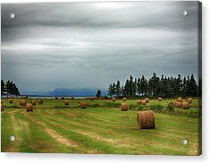 Acrylic Print featuring the photograph Harvest Time In Canada by Tatiana Travelways