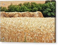 Acrylic Print featuring the photograph Harvest Time In Idaho by Tatiana Travelways