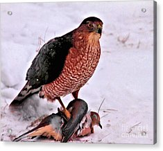 Acrylic Print featuring the photograph Hawk Takes Dove by Debbie Stahre