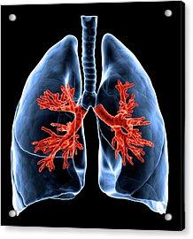 Healthy Lungs, Artwork Acrylic Print by Science Photo Library - Andrzej Wojcicki