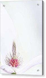 The Heart Of A Magnolia Acrylic Print