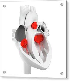 Heart Valves, Artwork Acrylic Print by Sciepro