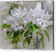 Heavenly Blossoms Acrylic Print