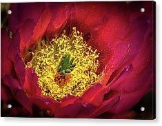 Hedgehog Bloom Acrylic Print