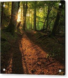Henllan Woods Sunrise Acrylic Print
