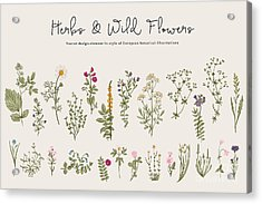 Herbs And Wild Flowers. Botany. Set Acrylic Print
